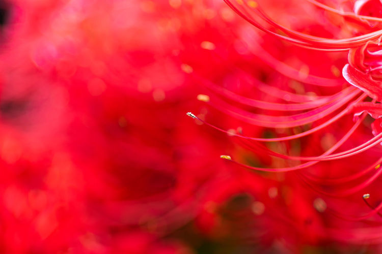 Full frame shot of water drops on red rose