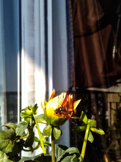 Close-up of yellow flowering plant on window