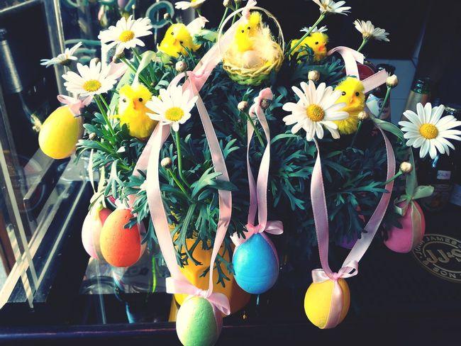 Barga Daaristo Easter Easter Eggs Italy Italy❤️ Easter Tree Colorful Eggs Daisy Daisys Daisies Daisy Flower