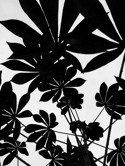 Leaf Ink No People Close-up Day Light And Shadow EyeEm Filter Eyeem Collection EyeEm Vision Tapioca Tapioca Plant Shadow Silhouette Black And White Abstract Nature Abstract Art Is Everywhere Perspectives On Nature Black And White Friday