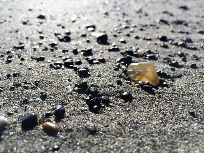 Hunting for Agates Beach Beachcombing Close-up Day Nature No People Outdoors Sand Selective Focus Textured