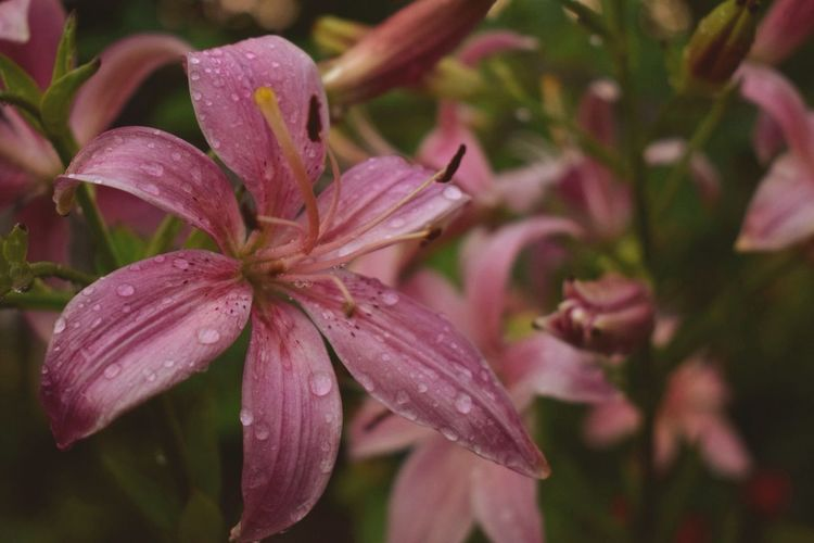 Close-up of wet pink flowering plants