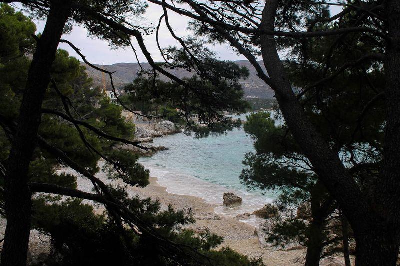 Srebreno Nature Tree Outdoors Beauty In Nature Beach Srebreno Zupa Dubrovacka Croatia Hrvatska