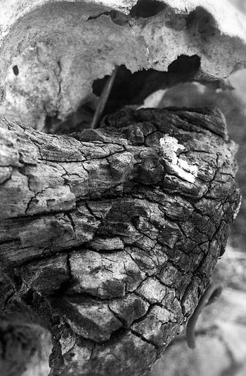 Dead nature. Bw_collection Texture EyeEm Best Shots Eye4photography