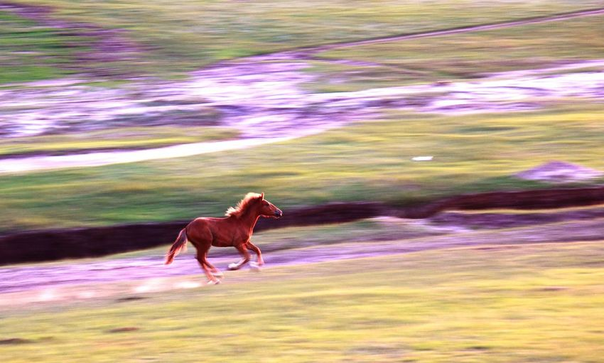 One Animal Nature Outdoors Animal Themes Beauty In Nature Multi Colored Domestic Animals No People Landscape Mammal Animals In The Wild Day Water horse Running 草原 马 飞奔在记忆中 跑