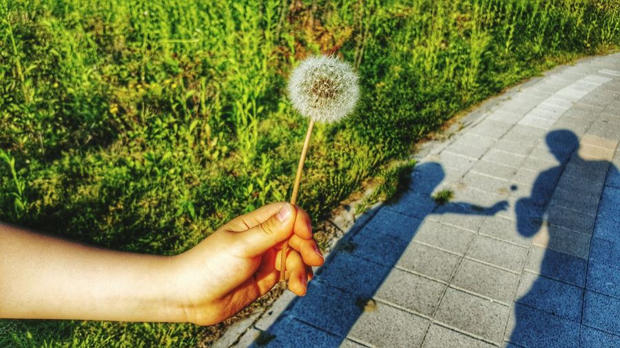 Close-Up Of Human Hand Holding Dandelion