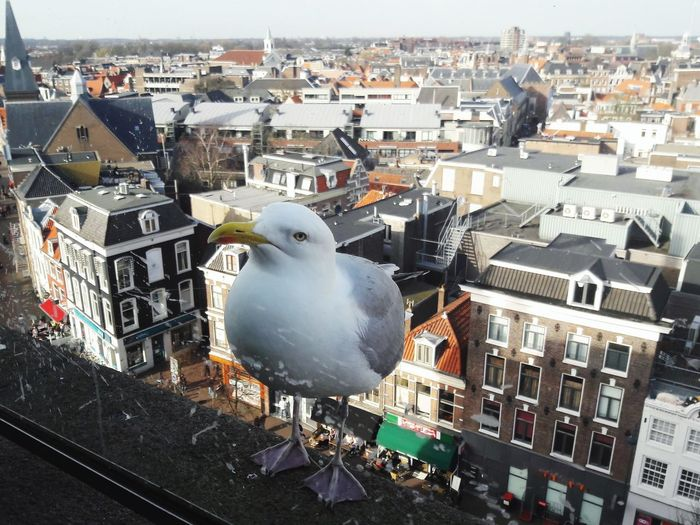"""""""How are you doing?"""" Travel Sunny Day Clouse-up Animals Animals In The City Bird City Cityscape Building Exterior Animal Themes Architecture Rooftop Roof Town Place Crowded Roof Tile Seagull Tiled Roof  TOWNSCAPE"""