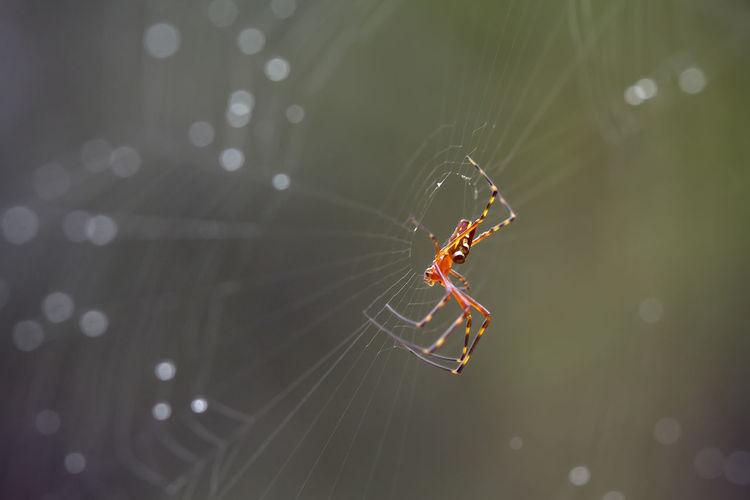 Spider in wildlie