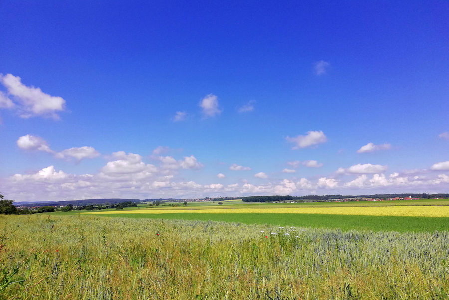 Agriculture Beauty In Nature Blue Cloud - Sky Crop  Environment Field Grass Land Landscape Rural Scene Scenics - Nature Simple Beauty Simplicity Sky Tranquil Scene Tranquility