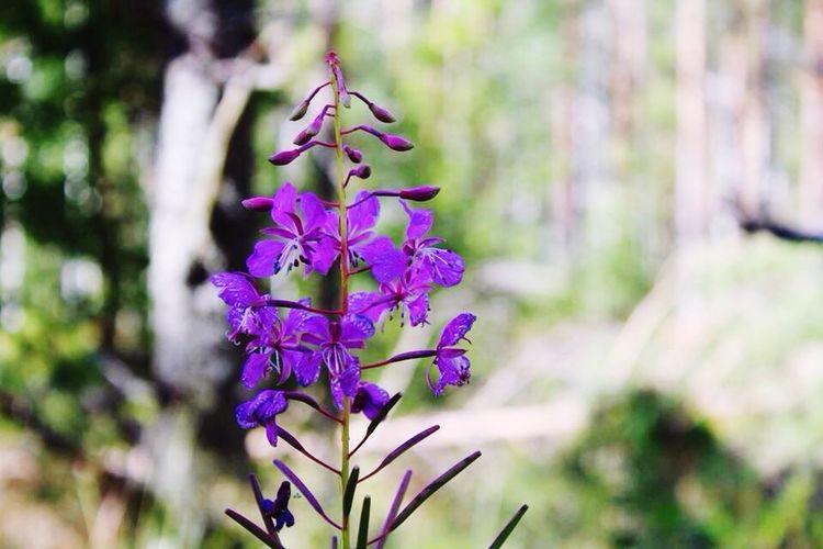 Nature is the Art of God ❤️ Finland Kinnula Beautiful Woods Holidays Roadtrip 2015