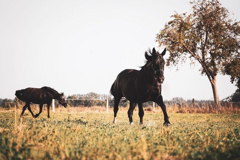 Horses Mammal