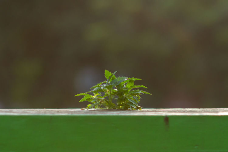 grass in concrete Green Color Plant Part Leaf Growth Plant Nature Close-up Selective Focus No People Day Outdoors Wood - Material Beauty In Nature Focus On Foreground Wall - Building Feature Freshness Small New Life Sunlight Field