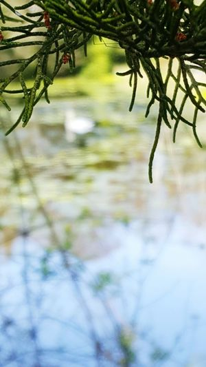 Nature Beauty In Nature Branch No People Day Close-up Water Growth Outdoors Tree Swan Plant Vibrant Color Scenics Tranquility Heaven Green Color