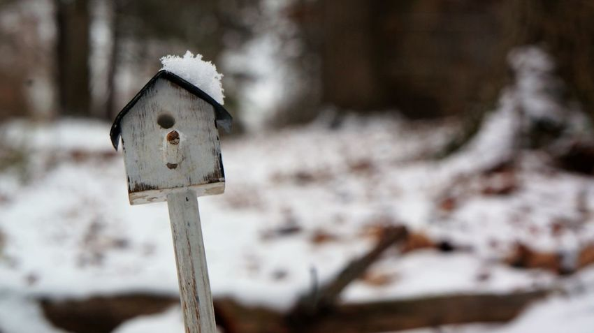 Beauty In Nature Birdhouse Cold Temperature Day Focus On Foreground Macro Nature No People Outdoors Snow Winter Winter Wood - Material