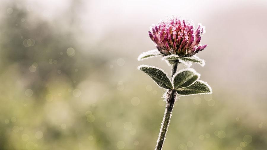Close-up of frozen flower outdoors