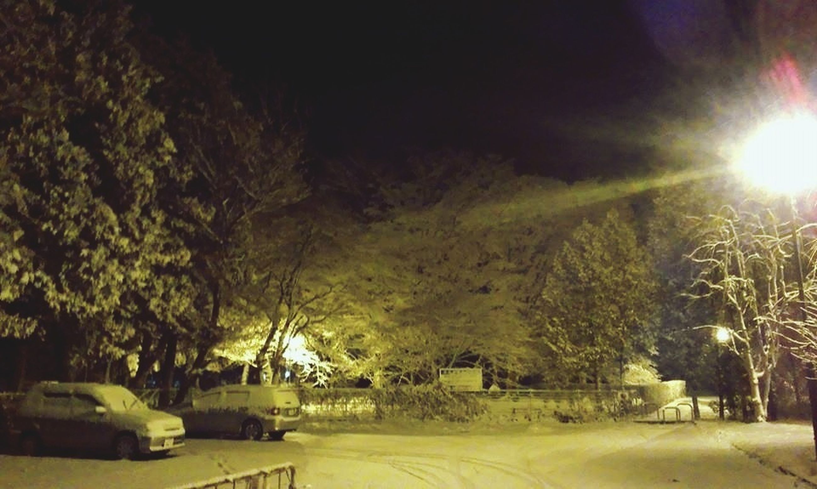tree, building exterior, built structure, architecture, sunlight, lens flare, sun, sunbeam, house, growth, nature, street, road, car, sky, transportation, illuminated, outdoors, tranquility, street light