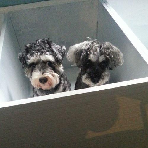 被困的兩隻小狗。Bubblebb Bluebluemui