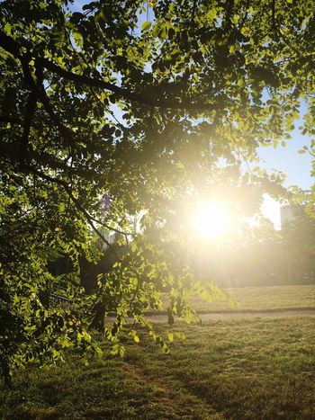 Sun Sunlight Branch Sunbeam Day Green Color Tranquil Scene Outdoors Green No People Back Lit Tranquility Beauty In Nature