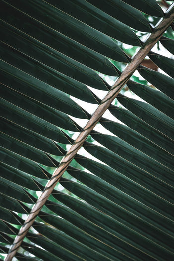 Background Backgrounds Banana Leaf Banana Tree Beauty In Nature Close-up Day Freshness Frond Green Color Growth Indoors  Leaf Low Angle View Nature No People Palm Tree Simplicity Texture