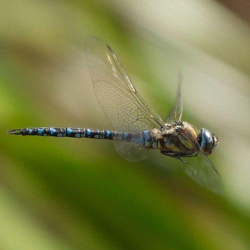 øyenstikker østensjøvannet EyeEm Nature Lover Sonya77 Dragonfly SigmaLenses