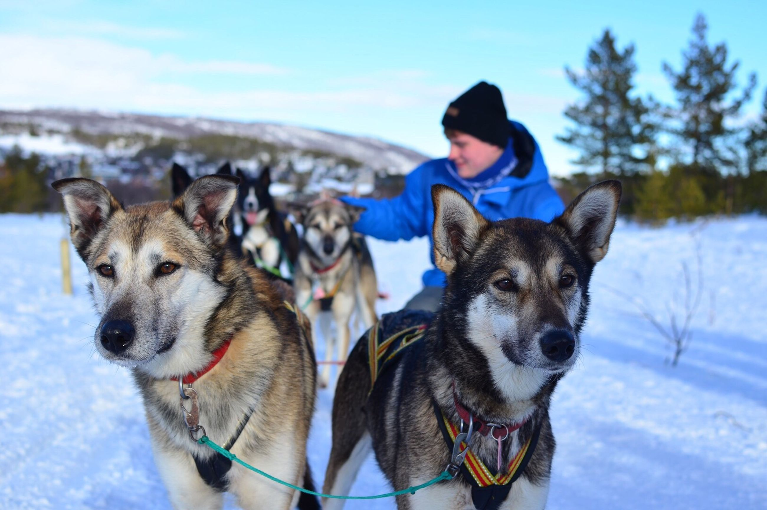 domestic animals, pets, dog, mammal, animal themes, winter, snow, one animal, cold temperature, looking at camera, portrait, lifestyles, pet collar, leisure activity, season, pet leash, focus on foreground, sky, togetherness