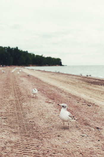 Animal Themes Animal Wildlife Animals In The Wild Beach Beauty In Nature Bird Close-up Day Nature No People One Animal Outdoors Perching Sand Sea Shore Sky Water