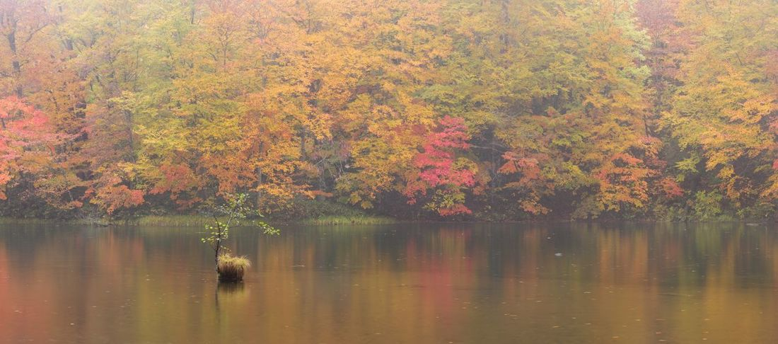 Autumn Tree Nature Beauty In Nature Lake Leaf Water Scenics Waterfront Tranquil Scene Reflection Tranquility Change Fog Forest No People Growth Day One Animal Animal Themes