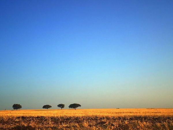 Planície Alentejana, sobreiros Field Agriculture Landscape Tradition The Week On EyeEm