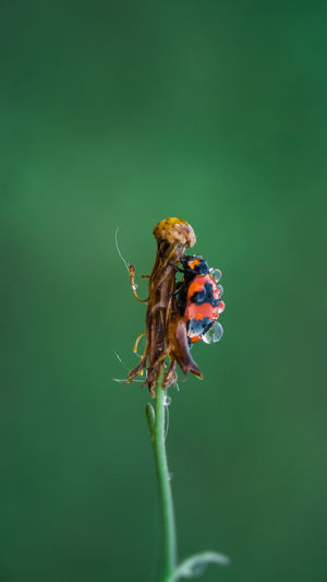 Insect Colored