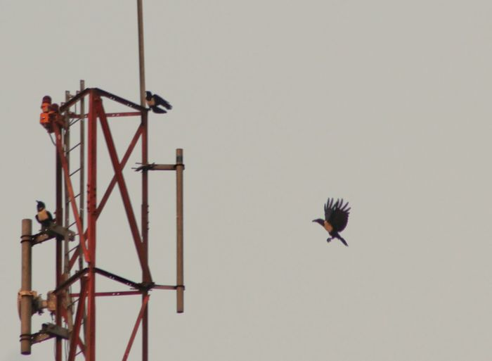 nestling birds on a communication tower Crane Tower Communication Sky Technology Science Flying Bird One Animal Day Outdoors Animal Themes Full Length No People Sky