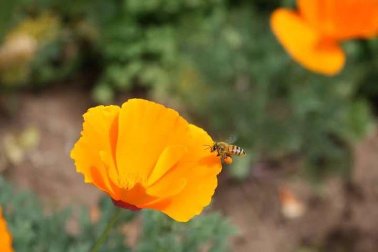 Busy Bee big scoop Flowerpower