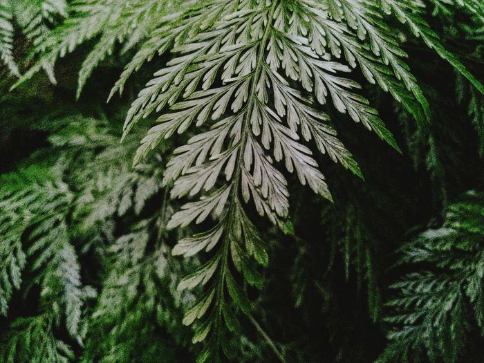 Full frame shot of fern plant