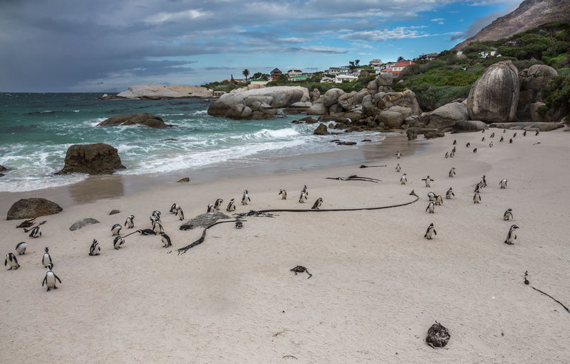 Animal Themes Beach Beach Life Beauty In Nature Bird Boulder Beach Cape Town Day Horizon Over Water Large Group Of Animals Nature No People Outdoors Penguins Pinguine Rock - Object Sand Scenics Sea Sky South Africa Tranquility Water