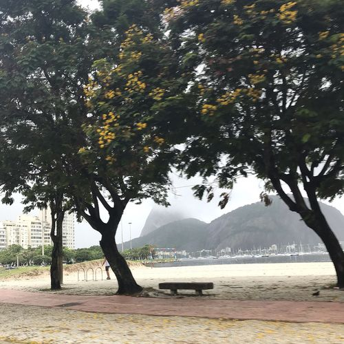 Banquinho Tree Plant Water Beauty In Nature Tranquility Nature Scenics - Nature Day Growth Tranquil Scene Land Mountain No People Sunlight Outdoors Sea Beach Sky