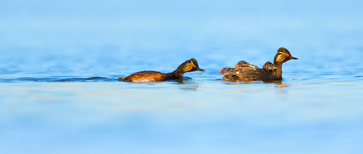 Close-up of duck swimming in lake against sky