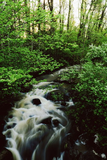 Flow. Summer Finland Landscape Nature_collection Nature Photography River Lush, Color Photography G5X