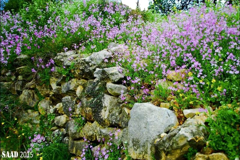 Wildflowers Wild Nature Spring in Ghalboun-Byblos Courtesy Of Bob Saad
