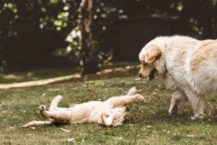 View of dogs lying on ground