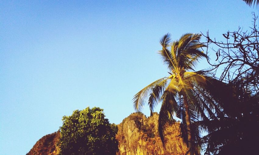 Natural Sky And Clouds Trees Mountain #coconuttree