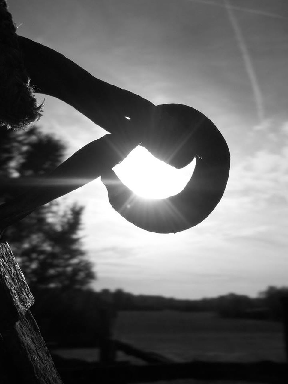 human hand, focus on foreground, outdoors, silhouette, sky, nature, tree, human body part, close-up, day, one person, beauty in nature