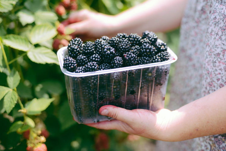 Midsection of woman holding blackberries in container