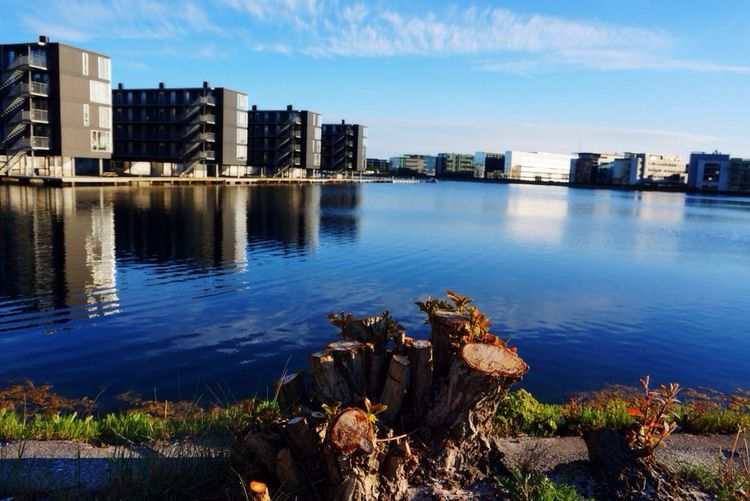 A cut tree trunk along a harbor bordered by apartment houses