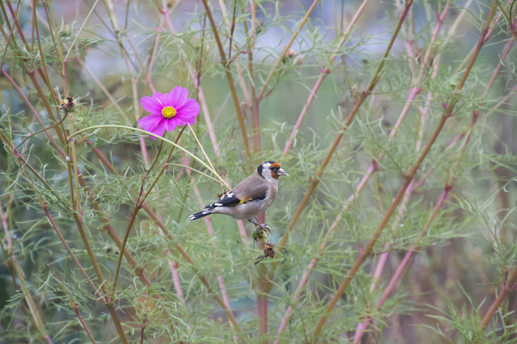 View of bird perching on flower