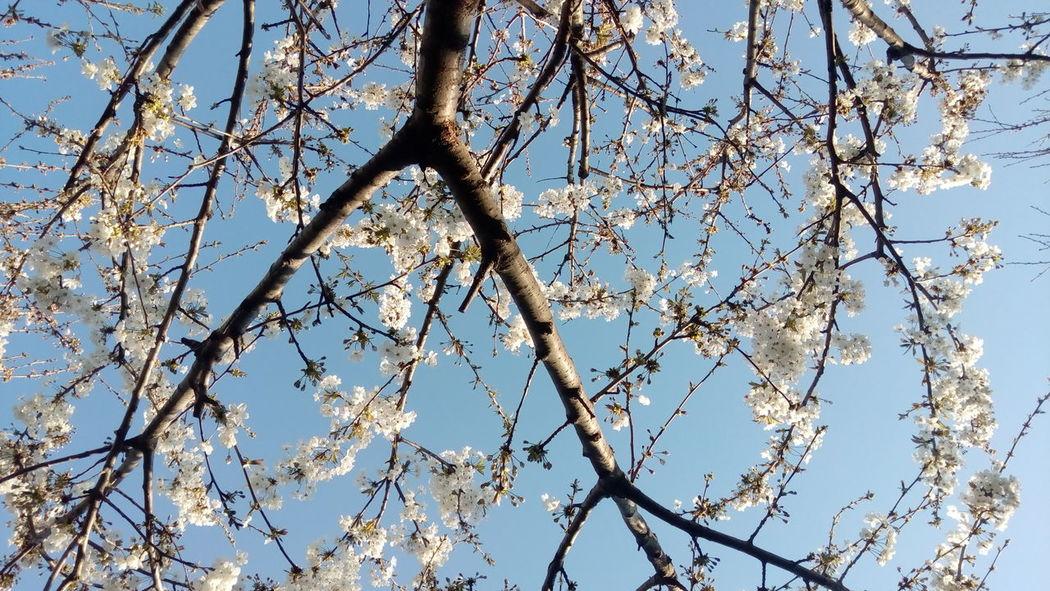 Nature Nature_collection Spring Springtime Spring Flowers Nofilter Noedit Medusangel