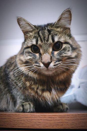 Joxan 🐱 Cat