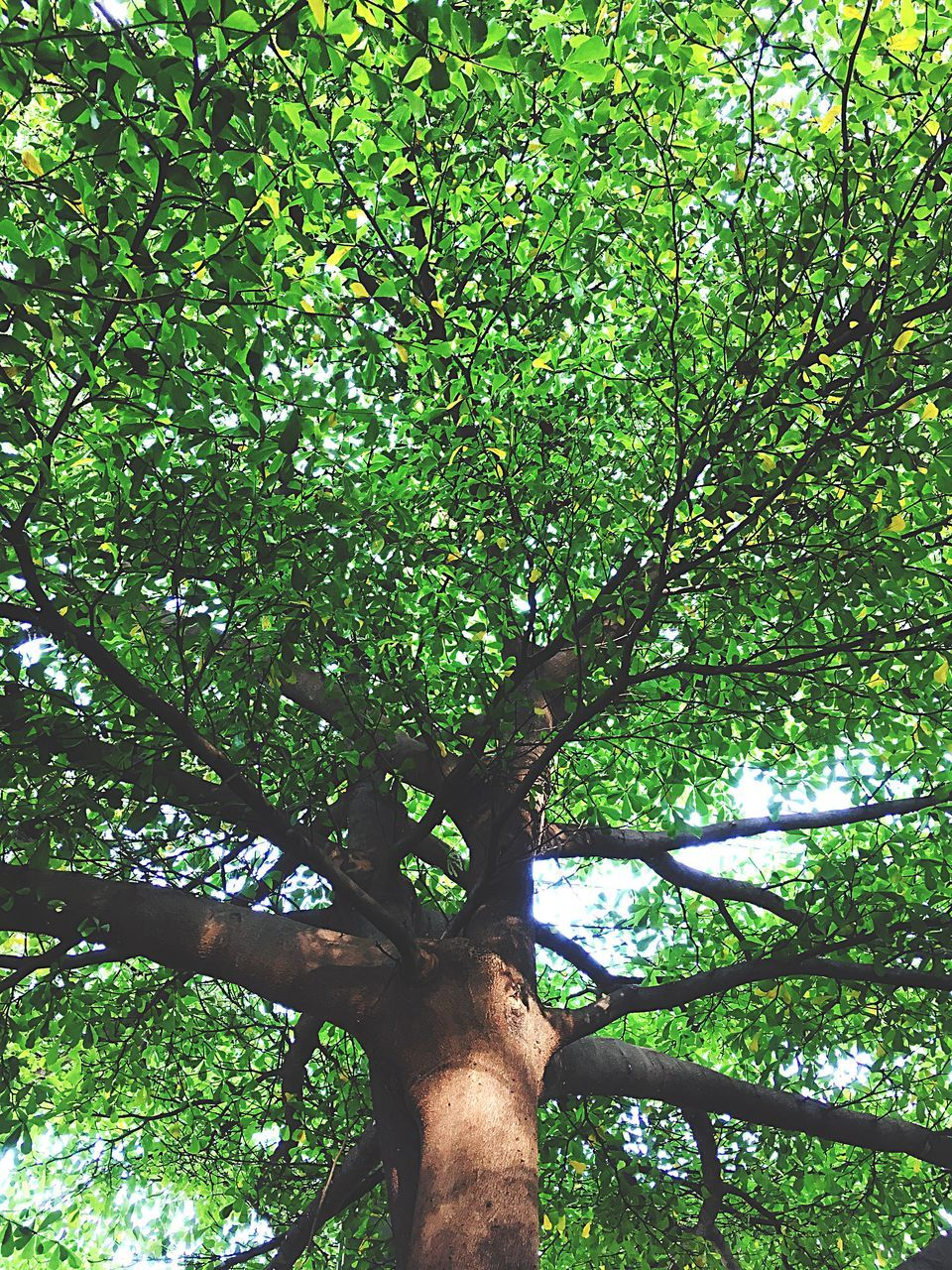 tree, tree trunk, nature, growth, branch, low angle view, green color, day, tranquility, outdoors, beauty in nature, no people, forest