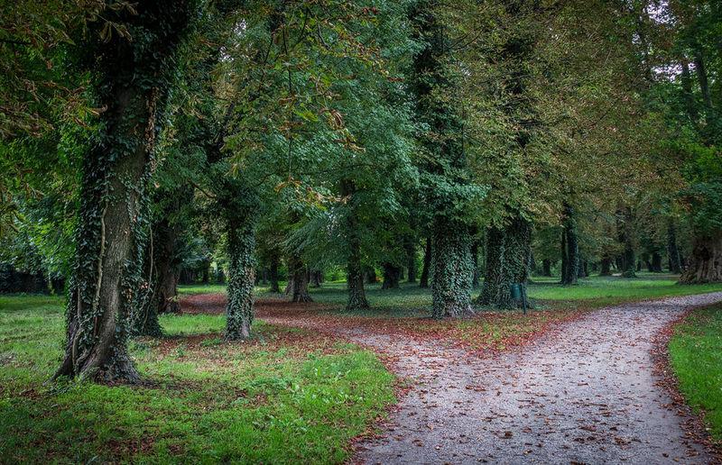 Park Nature Walking Around Autumn