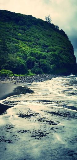 Hawaii Pololu Valley, Ocean View Black Sand Beach Hike Flowers, Nature And Beauty Nature Hawaiian Enjoying Life Traveling Water