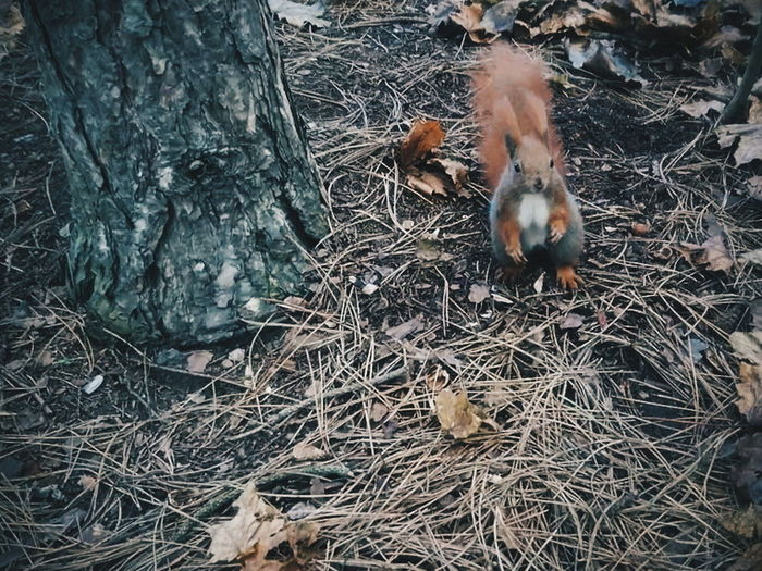 Squirrel Beauty In Nature EyeEm Best Shots EyeEm Best Edits Rodent Mammal High Angle View Animals In The Wild Nature Close-up No People Domestic Animals