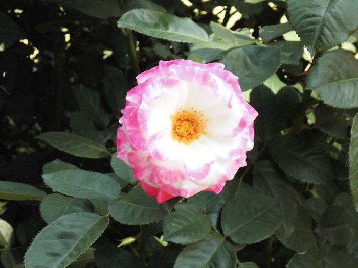 はな 花 はな ピンク色 植物